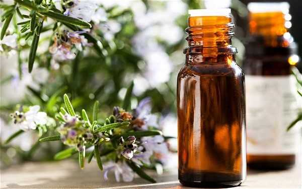 มาดูงานวิจัย Rosemary Essential Oil (น้ำมันหอมระเหยโรสแมรี่) มีดีอย่างไรบ้าง
