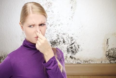 วิธีลดกลิ่นอับ สร้างบรรยากาศที่ดีในห้องนอนให้หลับสบาย ตื่นขึ้นมาแล้วสดชื่น